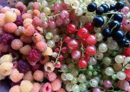 bessen uit eigen tuin, Wol&Co, kleurinspiratie