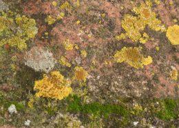 Wol & Co inspiratiebeeld: Geel korstmos / yellow lichen