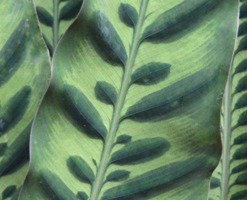 Wol&Co, inspiratie beeld, structuur, plantblad 2