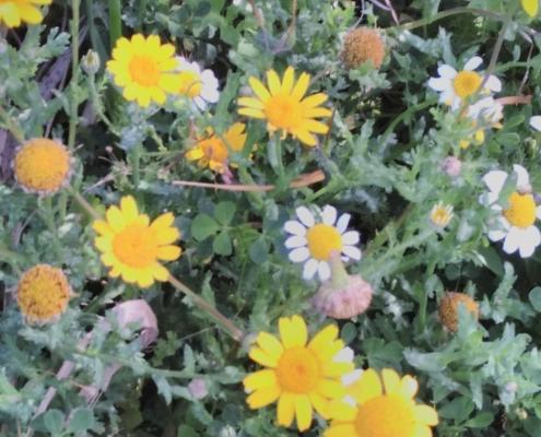 Wol & Co Collioure - bloemen