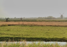 Wol-Co-Hollandse-polder